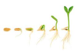 froe-udvikling